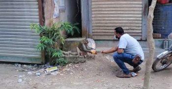 শ্রীনগরে খাহ্রায় ঘুরে বেড়াচ্ছে বানরের দল